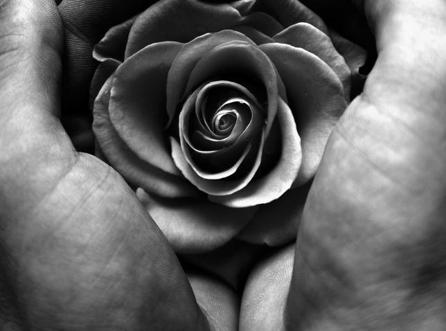 embrace of a rose - http://www.ladiesat11.com/